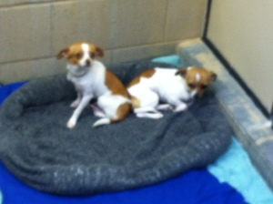 Puppies wait to be adopted into a loving home